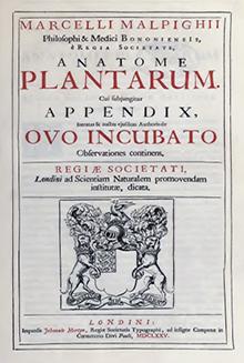 Anatome Plantarum 2