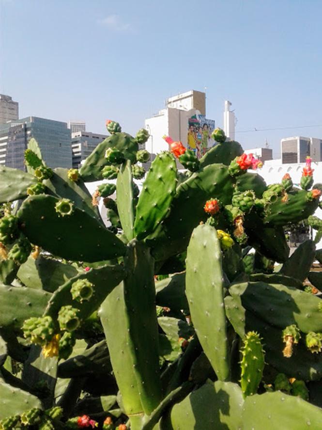 Nopalea cochenillifera - Canto das Flores n. 3