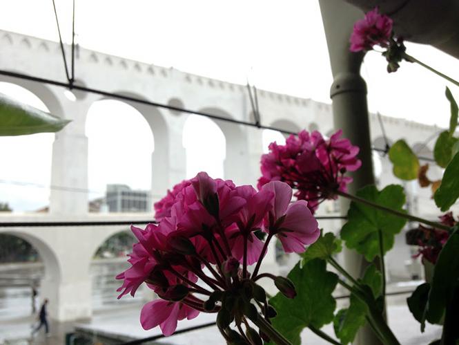Pelargonium x hortorum - Canto das Flores 9