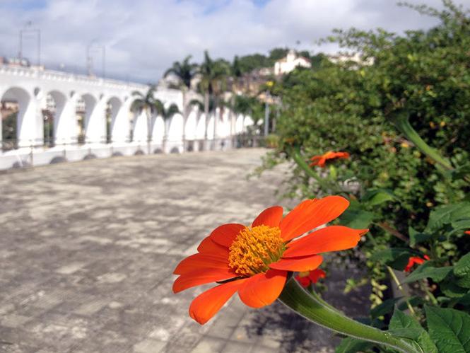 Tithonia rotundifolia - Canto das flores 5