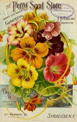 Tropaeolum majus - Seed Annual 1896
