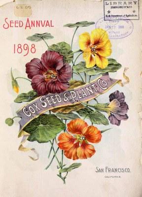 Tropaeolum majus - Seed Annual 1898