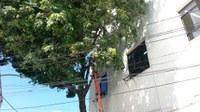 Concluída a poda de árvores no IB