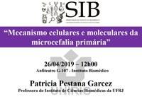 Seminários do IB dessa semana discute mecanismos celulares e moleculares da microcefalia primária
